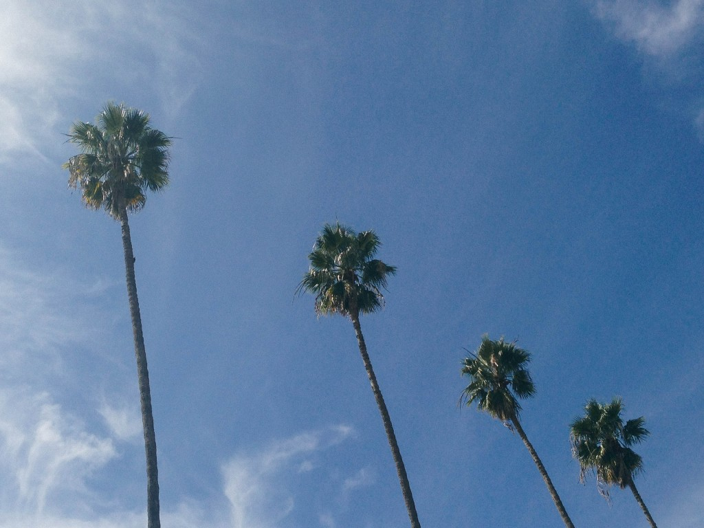 palm trees in CA_